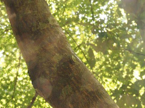 摂津峡のカタツムリ