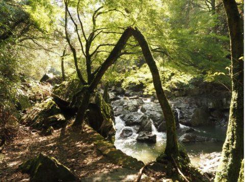 摂津峡の夫婦岩